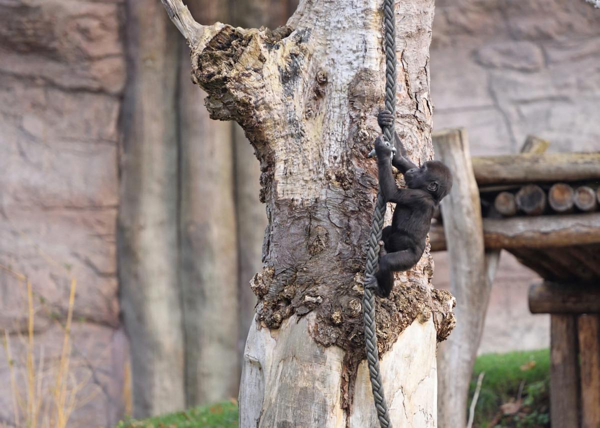 Incendio allo zoo di Krefeld, strage di scimmie